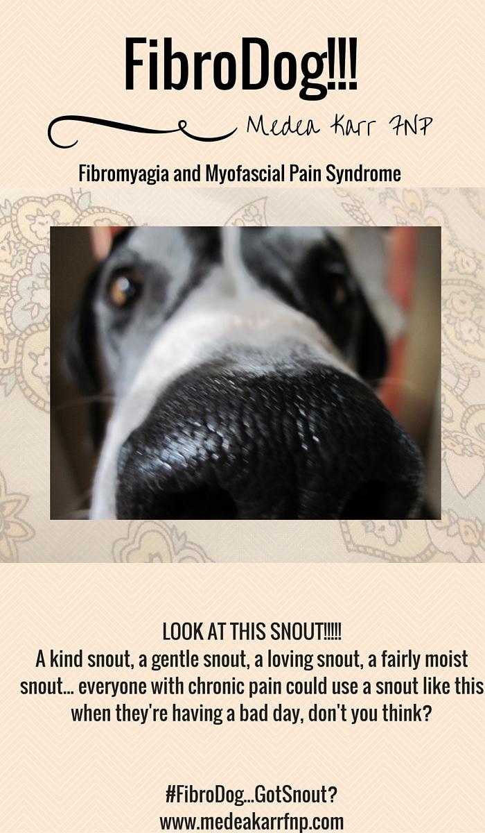 FibroDog snout Pinterest fibromyalgia chronic pain www.medeakarrfnp.com